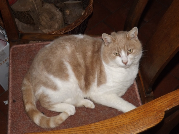 This is Chaucer. He is my parents' cat. He's lovely. Very sweet and affectionate. They took him in when he was a stray about three years ago, and we think he's about ten years old. He broke his leg while he was a stray so he can't jump well or run, but he does love that chair next to the fire.