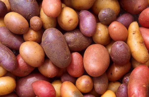 A selection of different varieties of potatoes